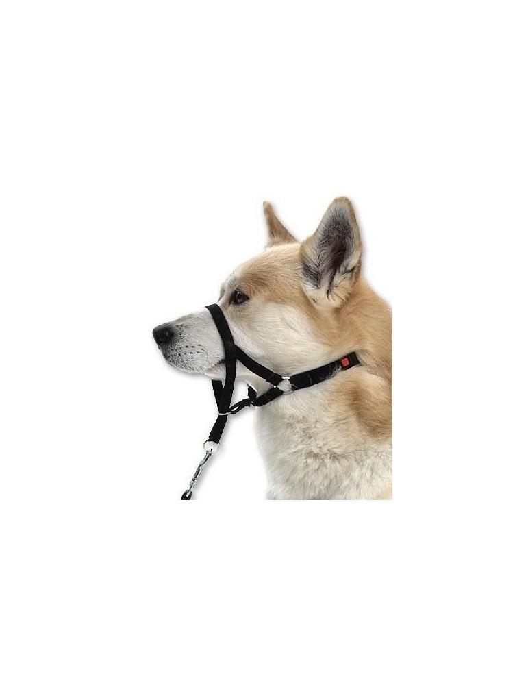 Licol éducatif Master Control pour chien de type Cocker