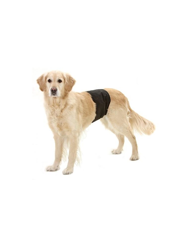Gentleman Panty pour chien